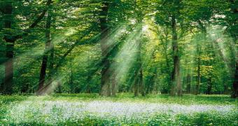 Biyokütle, Biomass