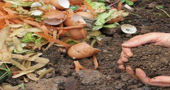 organik gübre_kompost
