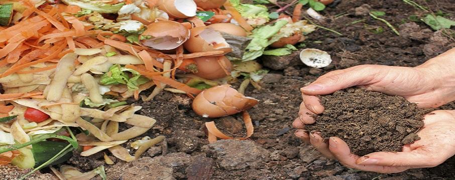 Çöpteki Siyah Altın: Kompost