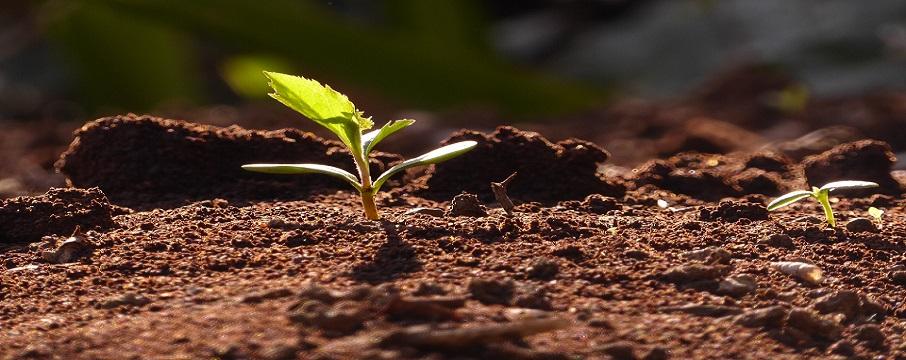 Toprağı Korumak, İklimi Korumaktır