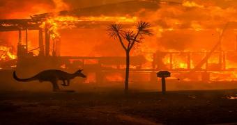 mega yangınlar avustralya
